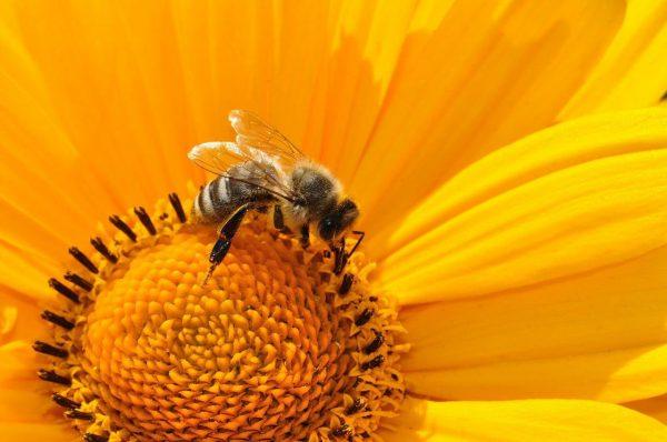 Miere naturala, miere de albine